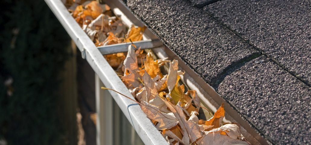 Home maintenance problem: Fall leaves in rain gutter.