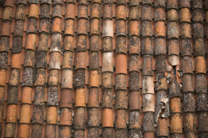 If you don't keep up on maintenance, your expensive tile roof can look like this