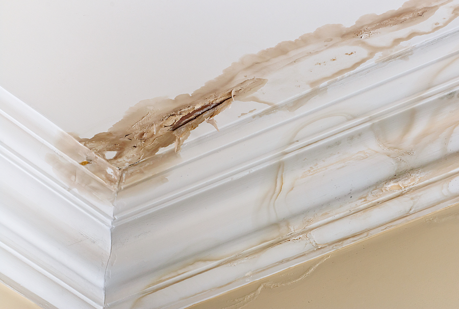 Peeling paint on an interior ceiling a result of water damage dripping down