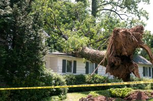 Uprooted tree has caused roof damage on home after a wind storm