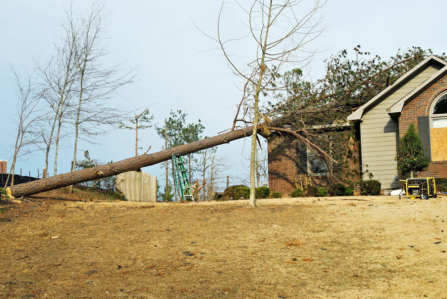 House with a fallen tree on the damaged roof due to a tornado or hurricane